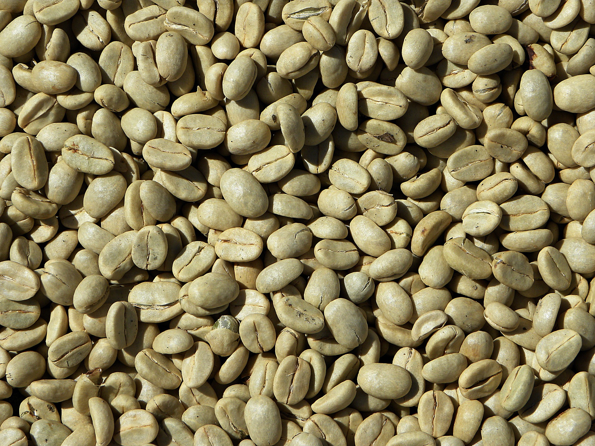 Buy Coffee Beans Blog Archive Green Coffee Beans Make Your Own
